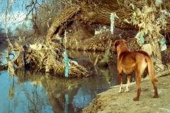 kako-objasniti-psu-Foto-Ivica-Stošić