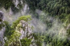 Kanjon-Rače-Tara_Vesna_Mijailović