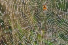 Pauk-Foto-Milinko-Radosavljević