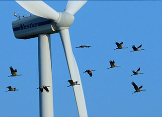 vetrenjace ptice