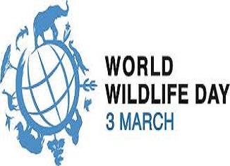 world wildlife globaldimension.org.uk