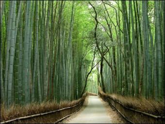 bambuspflaster