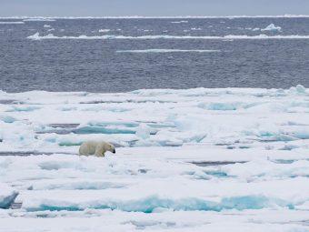 web-svalbard-sea-ice-rex