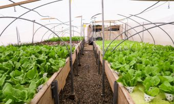 Green-in-the-City-Tel-Aviv-Rooftop-Farm-14-1020x610