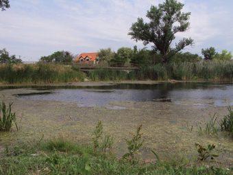 Foto: http://www.temerin.rs