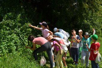 Foto: Pokret gorana Novog Sada