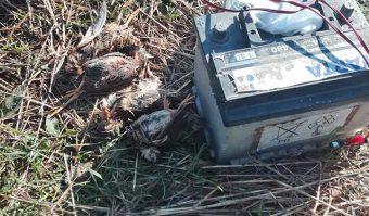 Foto: Društvo za zaštitu i proučavanje ptica Srbije