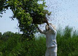 Pčelarstvo-beekeeping