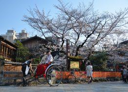Japan trešnjin cvet