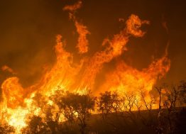 šumski_požar