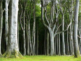 Букове шуме у НП Фрушка гора, Тара и Копаоник номиноване за светску природну баштину